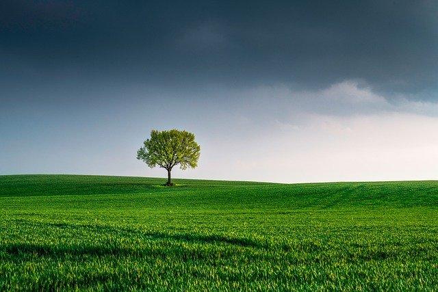 個人が出来るのは主に環境配慮と募金【SDGsの取り組み】